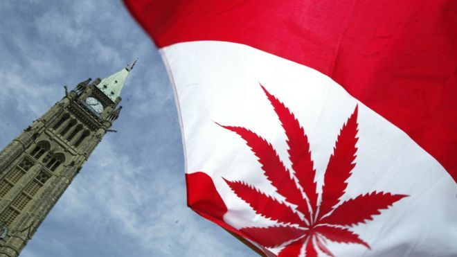 Canada va legaliza consumul de canabis incepand cu 17 Octombrie 2018